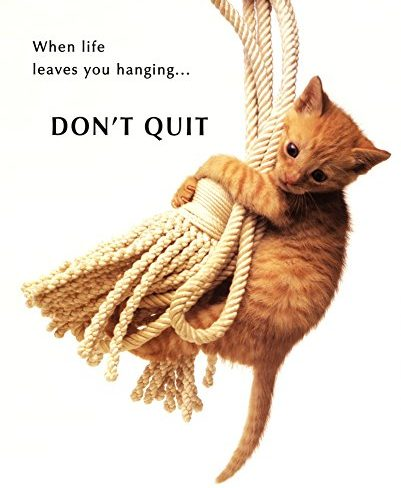 kitten hanging from a rope