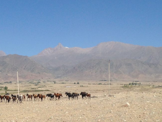 cowboy and horses in the distance