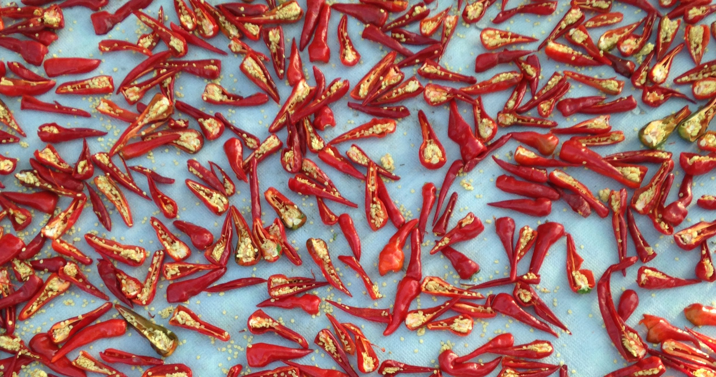 chilip peppers drying on a sheet