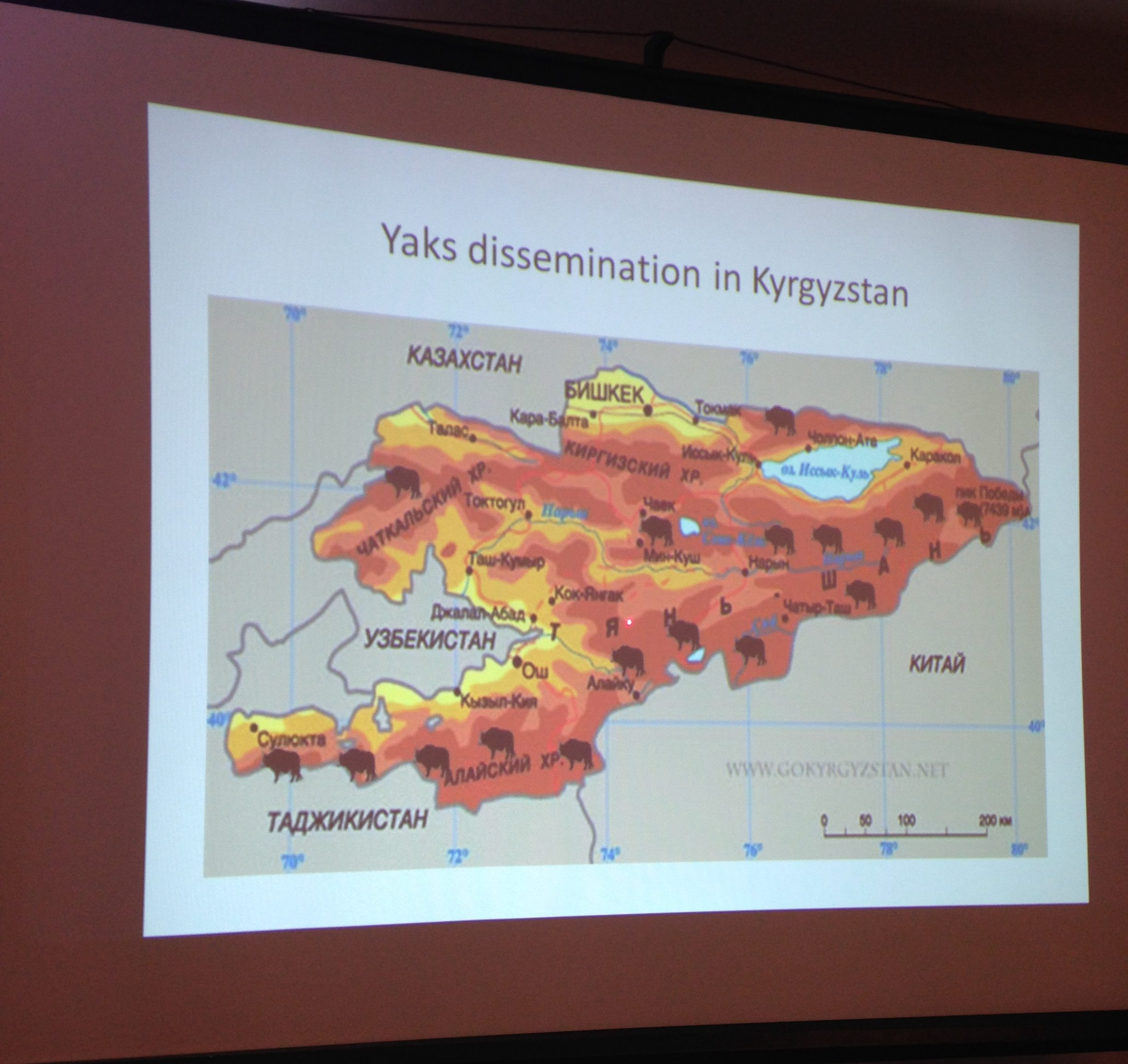 heat map of yak distribution in Kyrgyzstan. I am not making that up.