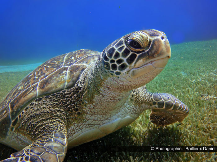 photo of a sea turtle on the sea bottom